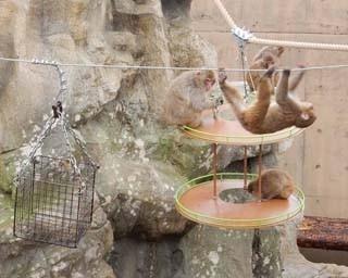 旭山動物園・2017年度の夏期開園でお披露目された、新たな「さる山」全景