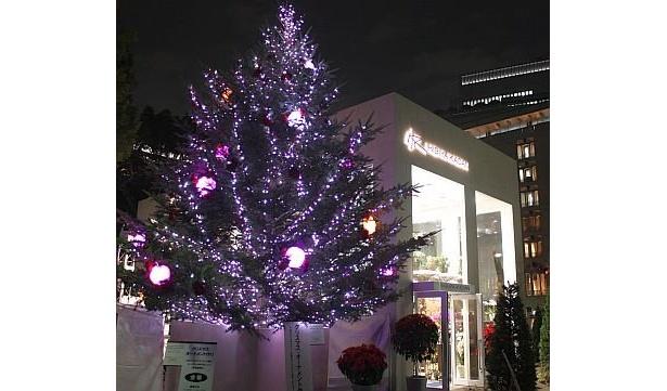 山田優さんが点灯したクリスマスツリー。本物のモミの木に、1個30cmもあるバラの形をした電飾があしらわれている。12/25(金)まで設置