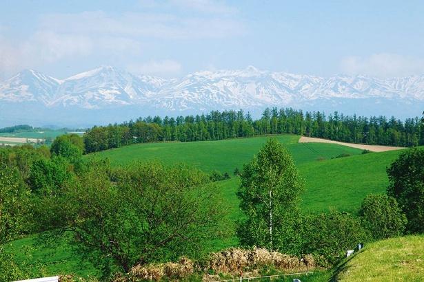 正面には十勝岳連峰が広がり、美しい美瑛の景観を一望できる