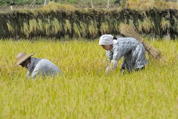 「ひよっこ」の農作業シーンは、茨城県内で地元の人たちの協力のもと撮影された