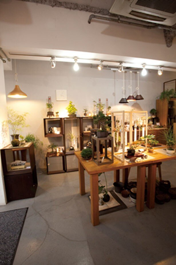 盆栽教室なども開催。川沿いの開放的な雰囲気の中で緑のインテリアが選べる