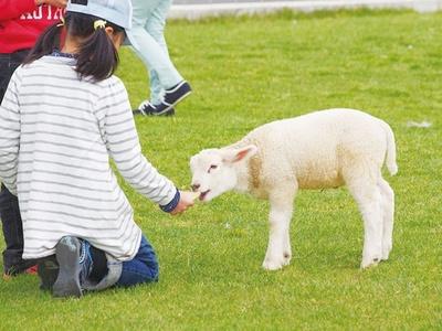 動物とふれあうこともできる/ワールド牧場
