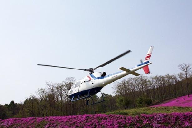 【写真を見る】「たきのうえ芝ざくらまつり」のヘリコプターによる遊覧飛行