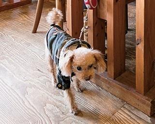 愛犬も大満足!福岡・糸島でペットと遊べるスポット3選
