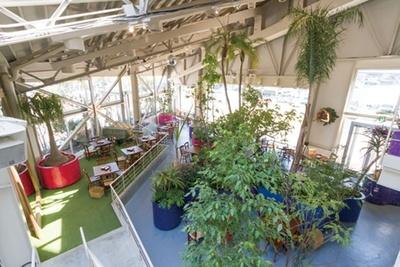 ガラス張りの店内にセンスよく緑が配され、まさに植物園のよう/FISH IN THE FOREST ~TOOTH TOOTH×そら植物園~