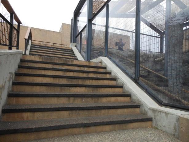 旭山動物園・「もうじゅう館」ユキヒョウの放飼場横にある階段