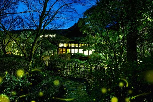 太閤園の広大な日本庭園に、ホタルが乱舞する(イメージ)