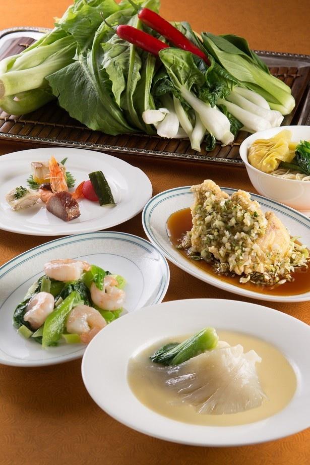 【写真を見る】「中国料理 皇家龍鳳」では、凝縮したスープで煮込んだふかひれの醤油煮込みやその日のおすすめの国産中国野菜を味わえる