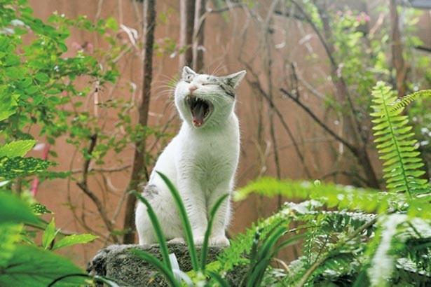 看板ネコも有名。2年目となる今のネコはやや留守がちで、名前もまだないそう/カンテ グランデ 中津本店