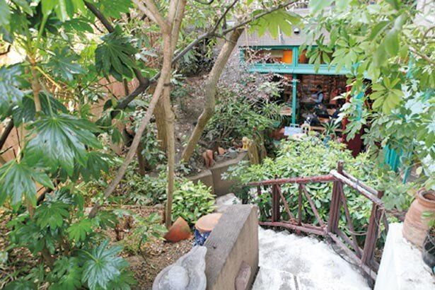 マンションの地階に緑の空間が。ウルフルズのトータス松本氏が働いていたことでも有名/カンテ グランデ 中津本店