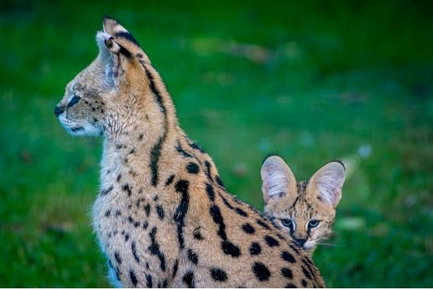 「けものフレンズ」は実在する動物園とコラボするなど話題の作品(写真はイメージ)