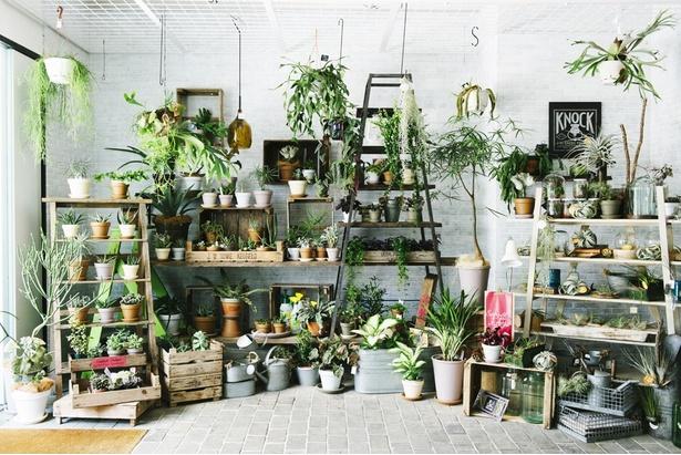【写真を見る】一点でも映える個性的な植物に出会えるお店