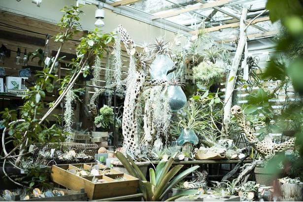 オールジャンルの植物に出会えるお店