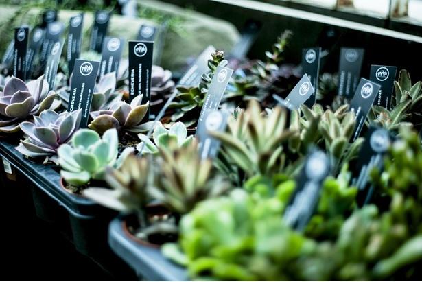 屋外売り場もあり、たっぷりの陽射しを浴びて植物ものびのびと育っている
