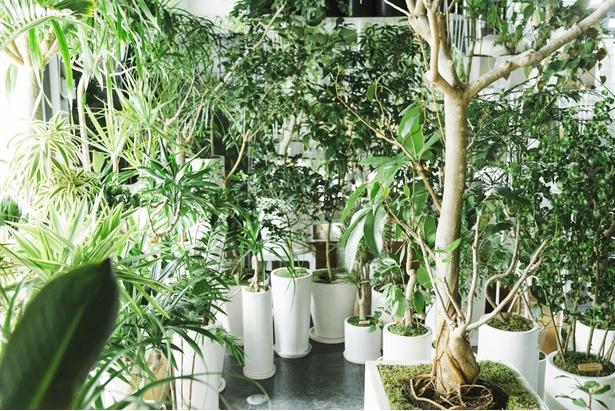 形で魅せる観葉植物に出会えるお店