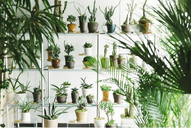 【写真を見る】珍しい多肉植物(サボテンが中心)も