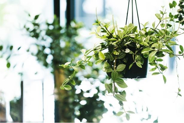 植物は育てやすい観葉植物や多肉植物が中心