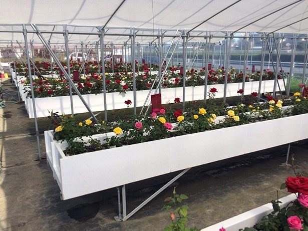 「ROSE LABO」の施設。安心・安全なバラを使うことを一番のこだわりにしている