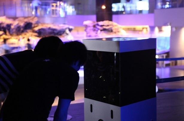 すみだ水族館と、東武動物公園は、幻想的な夜の水族館でホタルの観賞が楽しめるイベント「ほたるの夜」を今年も開催する