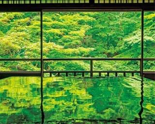 書院の2階から眺める「瑠璃の庭」の青もみじ。大きな座卓に緑が映り込んだその風景は、まるで完成された一枚の絵画のような美しさ/瑠璃光院