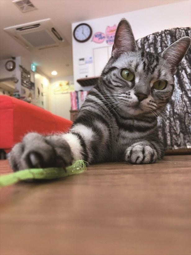 おもちゃを使って気を引いてみると、お手手を前に出した猫らしいショットが撮影できました