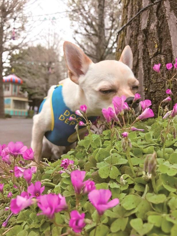 花壇のお花を手前にするだけで、何だかフォトジェニック♪