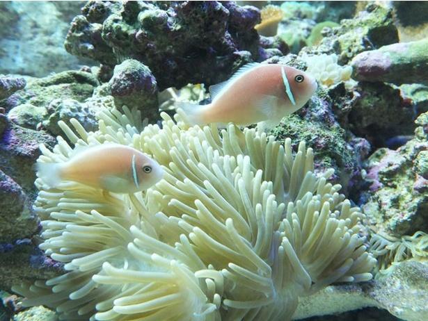 触れるだけでも危険なイソギンチャク類など、毒々しくも美しい生物が大集合