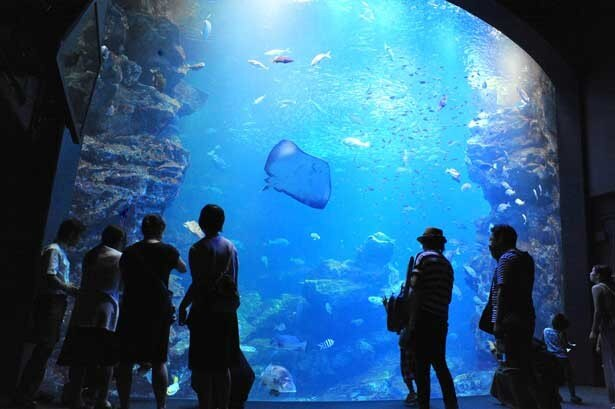 夜の京都水族館を楽しもう