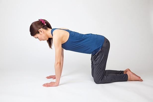キャットバック1:ひざをついて四つんばいになり、脚は腰幅に開く