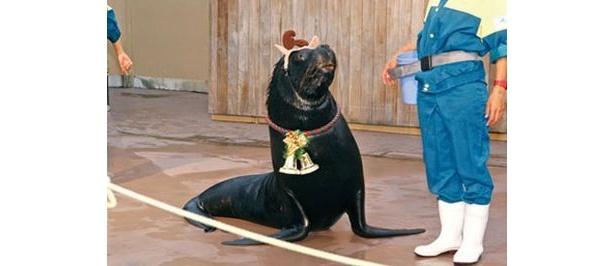 「海の動物たちのショー」(横浜・八景島シーパラダイス)