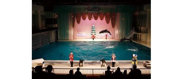 プールが一瞬にしてクリスマス!(京急油壺マリンパーク)