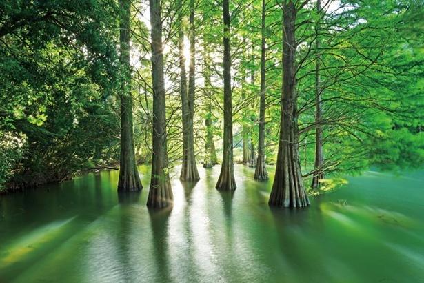 神々しい雰囲気に包まれた「篠栗九大の森」