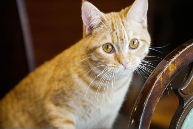 【写真を見る】2泊3日で貸し出されるネコたち