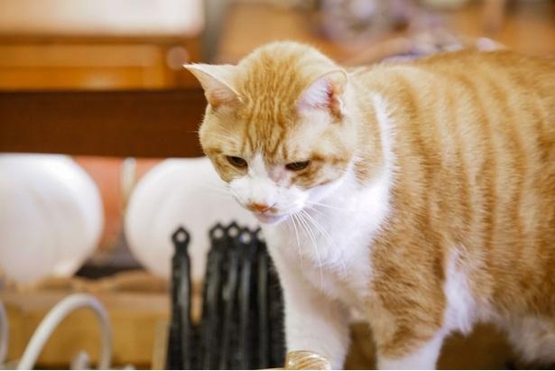 ネコは登場人物たちと心を通わせていく