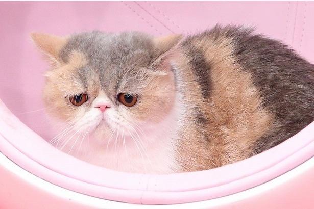 【写真を見る】番組の名物マスコット猫・アリスちゃん