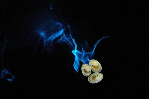 【写真を見る】ウミホタルの発光の様子(イメージ)