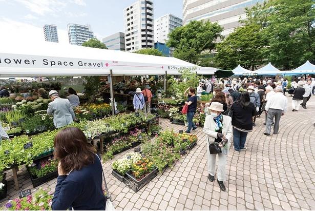 西7丁目で開かれる人気の花市場 他にもオススメのイベントが開催されます!
