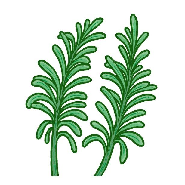 【写真を見る】新鮮な草木の香りが特徴のローズマリー
