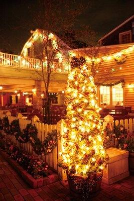 クリスマスの思い出にピッタリなフォトロケーションもいっぱい。パークをめぐりながらステキな写真をおさめよう!写真はケープコッドにあるツリー