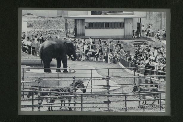 旭山動物園/開園当時の総合動物舎。アジアゾウやシマウマがいるのが分かる
