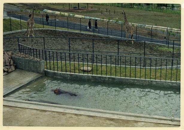 旭山動物園/総合動物舎にいた頃のキリンとカバの展示施設