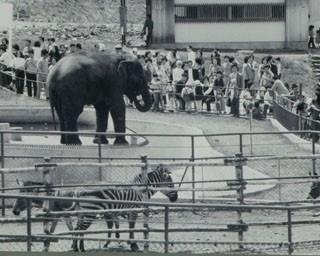 旭山動物園/1967(昭和42)年、開園当時のパンフレット