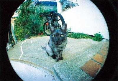 """""""Fisheye(フィッシュアイ)35mmフィルム""""動物の顔をアップで撮ればファニーフェイスに仕上がる!"""