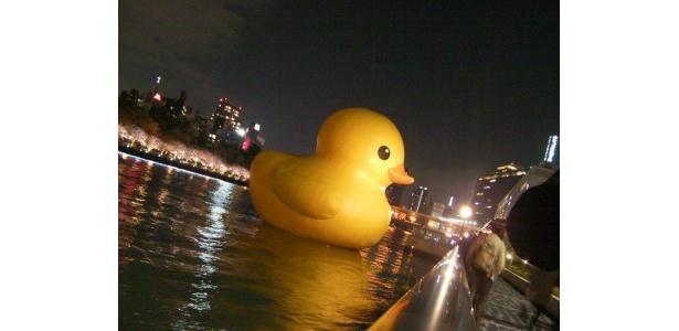 なんと八軒家浜近くには、「水都大阪2009」で話題になった巨大アヒルが復活!