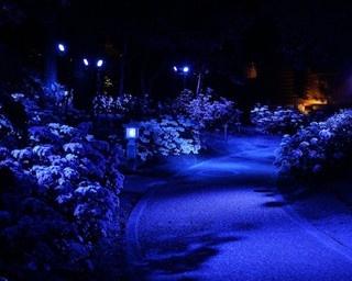「あじさいNight Walk」では音に合わせて照明が変化。幻想的な空間を演出する