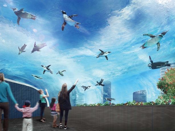 サンシャイン水族館の新展示「天空のペンギン」ではペンギンのカワイイおなかを下から眺められる
