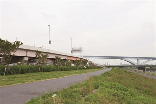 【写真を見る】荒川江北橋緑地