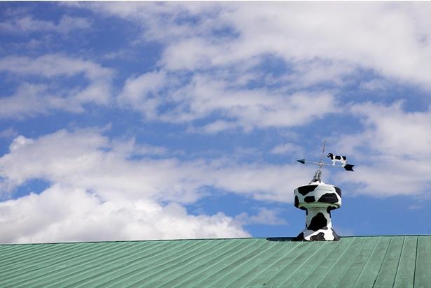 のどかな風景が広がる牛舎の屋根には、風見鶏ならぬ風見牛も。
