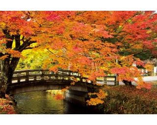 色鮮やかな紅葉が訪れる人を和ませる