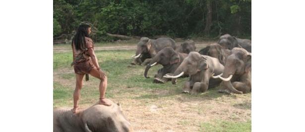 第2弾となる本作では、象の軍団も登場